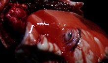 Trailer for Killer Unicorn movie 'CarousHell' off the Stirrups!!