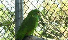 A parrot named after Freddy Krueger!!